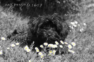 chien dans l'herbe Charente Maritime