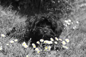 photo-chien-dans-herbe-paquerettes.