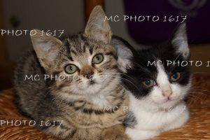 photo-deux-chats-mcphoto1617-charente
