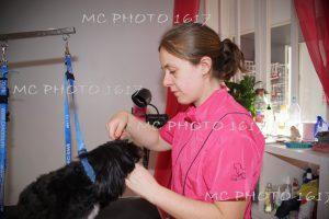 femme-qui-coiffe-un-chien-noir-et-blanc-sur-une-table-salon-toilettage-cognac-charente