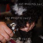 femme-qui-coupe-les-griffes-d-un-chien-noir-et-blanc-charente-cognac