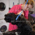 femme-qui-coupe-les-poils-d-un-chien-noir-et-blanc-charente-cognac-siant-jacques