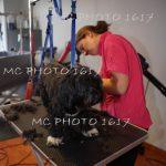 femme-qui-coupe-les-poils-d-un-chien-noir-et-blanc-dans-salon-toilettage-cognac-charente