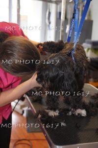 femme-qui-coupe-les-poils-d-un-chien-noir-et-blanc-mcphoto1617-charente