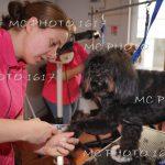 femme-qui-coupe-poils-aux-ciseaux-d-un-chien-noir-et-blanc-au-fond-on-voit-une-autre-femme-qui-nettoie-un-gros-chien-marron-clair-cognac-charente